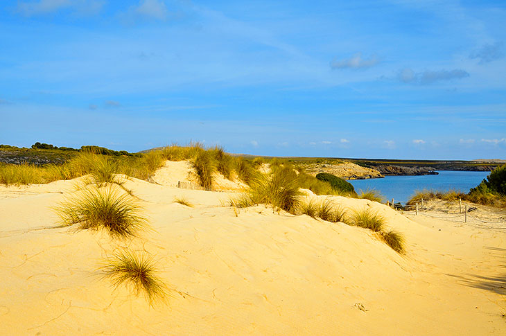 Yellow dunes of Son Saura beach